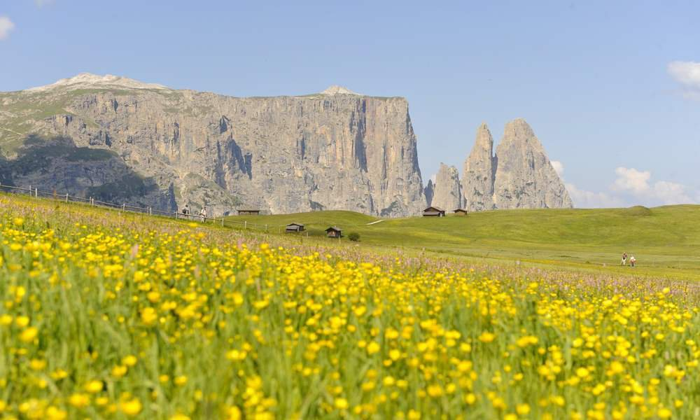 A vacation with your dog at Alpe di Siusi