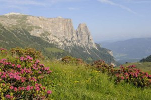 Holidays in Castelrotto - Dolomites 4
